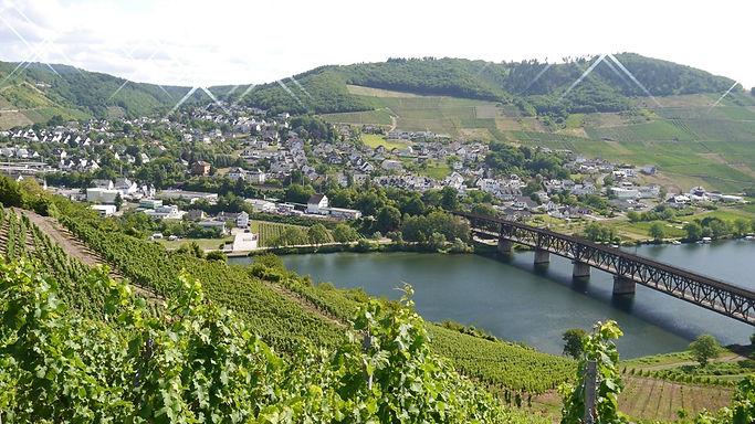 Mosel Mittelmosel Werbung Bullay Kommunikation Wein Riesling Rheinland-Pfalz