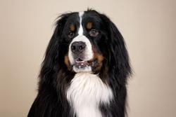 Big Dog 1
