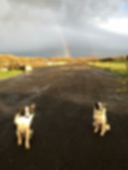 Blade, Lizzie and a rainbow
