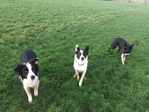 Blade, Lizzie and Daisy