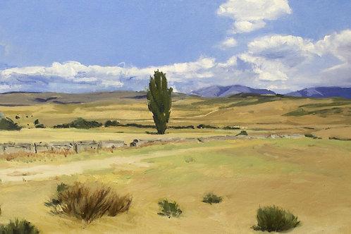 Árbol en Campo Abulense