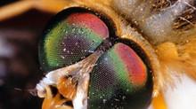 ¿Cómo ven el mundo los insectos?