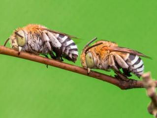 ¿Duermen los insectos?