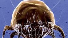 Alergia al polvo: ¿qué son los ácaros y cómo evitarlos?