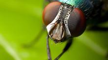 """Las moscas ya tienen su propio """"árbol de la vida"""""""