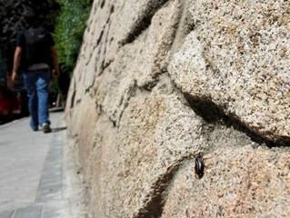 Crecen las plagas urbanas, otra consecuencia de la crisis