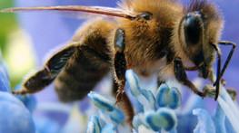 Las abejas tienen visión ultrarrápida
