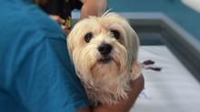 Adiós a Zoonosis: nace en Bogotá la Unidad de Cuidado Animal