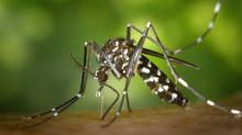 Los mosquitos, ¿por qué prefieren picar más a unos que a otros?