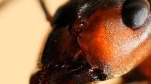 Hormigas de cerca