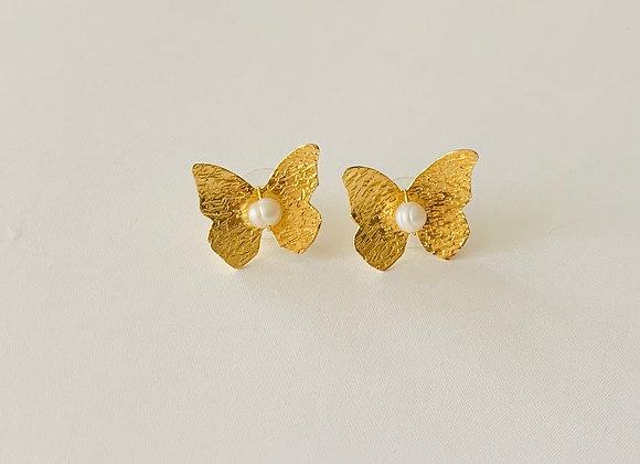 Caribbean Sweet Butterfly