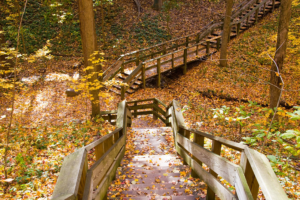 Trails at Holliday Park.jpg