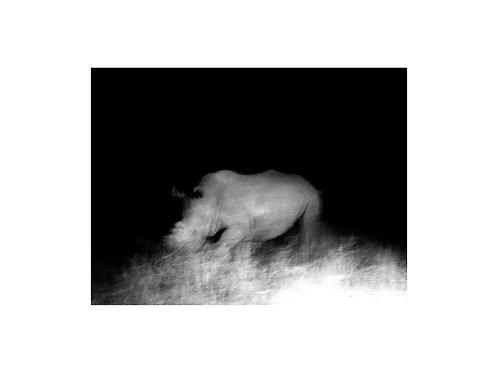 Rhinoceros, Nightfall series
