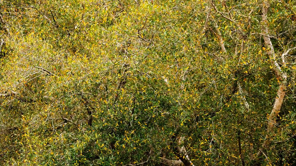 A Tree_DSC_0736.jpg