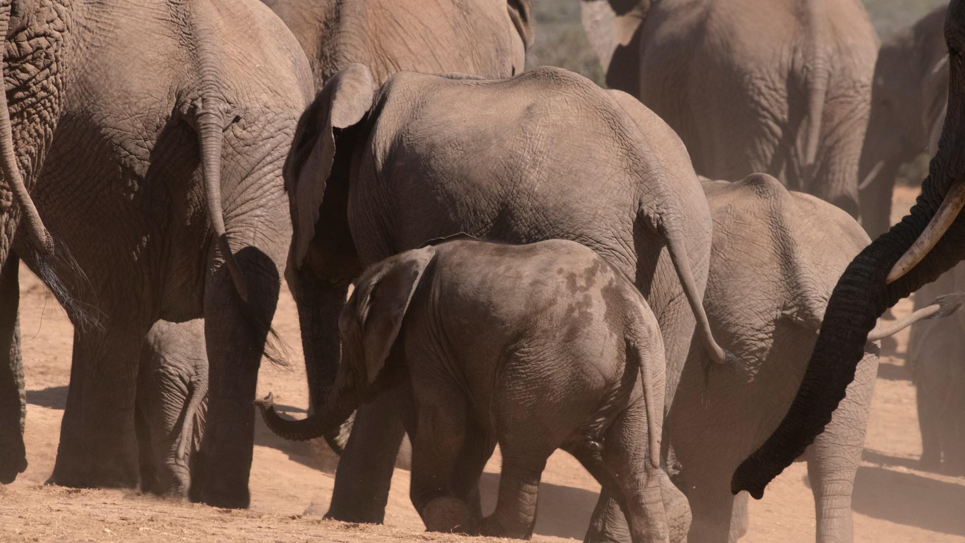a elephant_DSC_1271.jpg