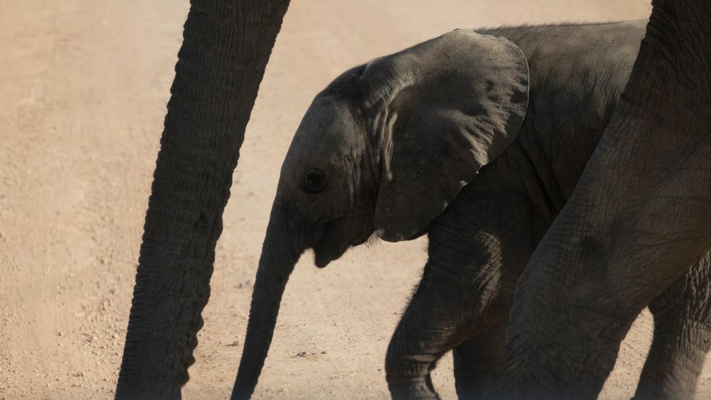 A-Elephant young 2_DSC_1550.jpg