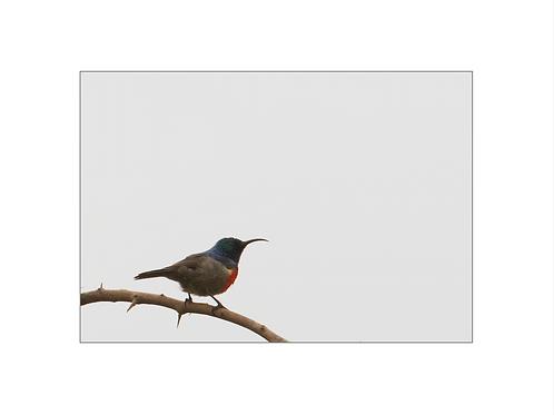 Sunbird; young generation series