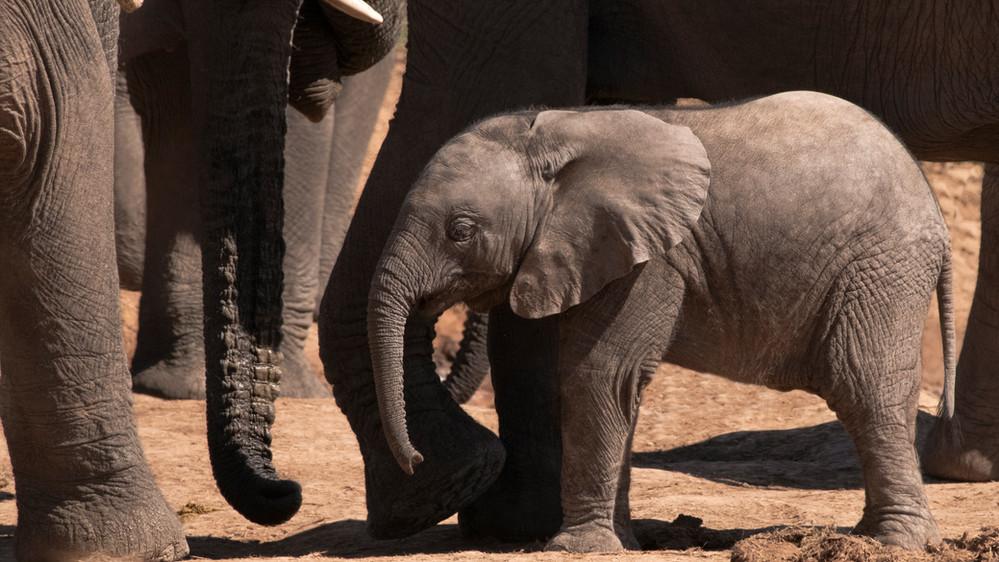a Elephant young II_DSC_1253.jpg