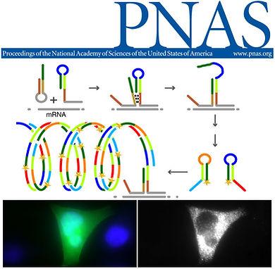 Fig1-PNAS-web.jpg