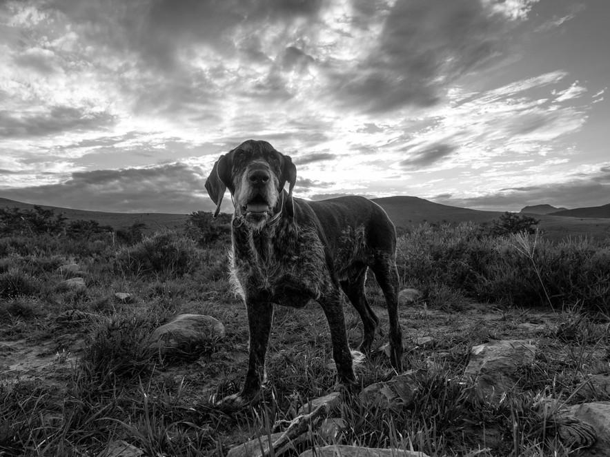 Margot Muir_ dog II-1080033.jpg
