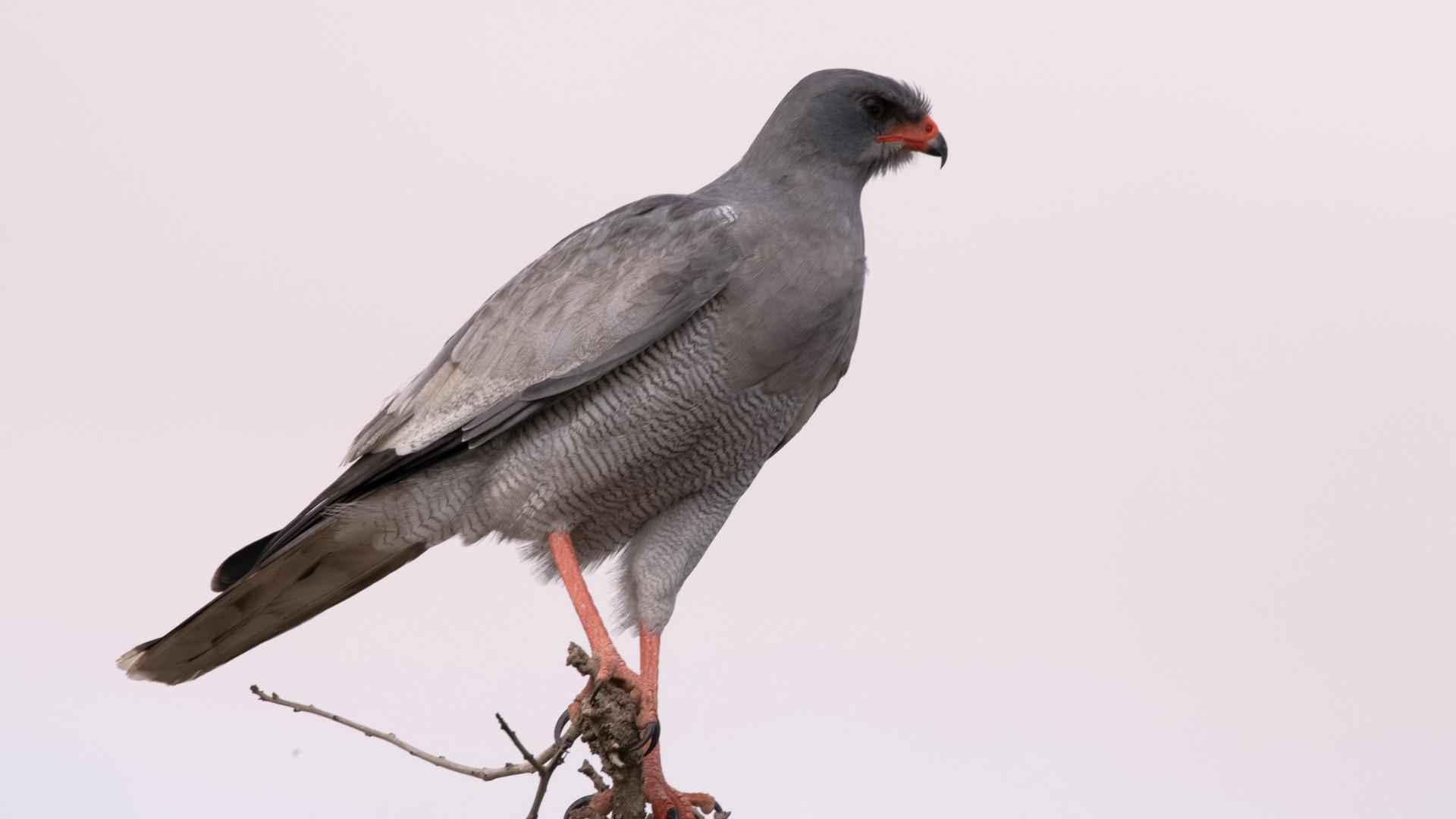 Bird 2_DSC_0684.jpg