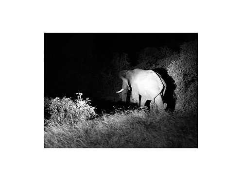 Elephant, Nightfall series