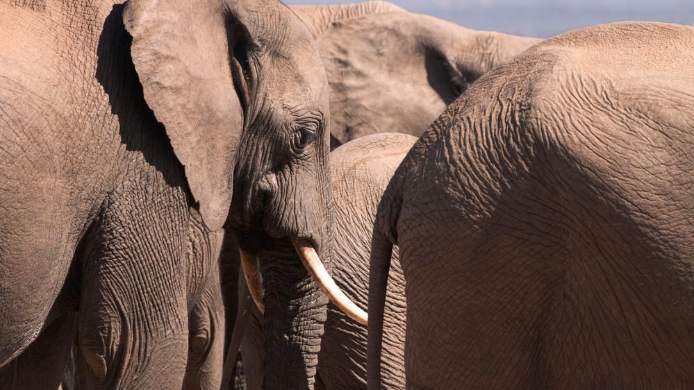 a elephant_DSC_1224.jpg