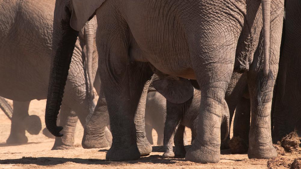 a elephant 3_DSC_1209.jpg