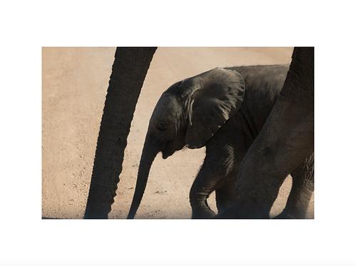 Elephant III, young generation series