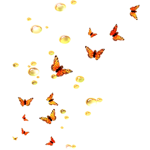 papillons_edited_edited.png