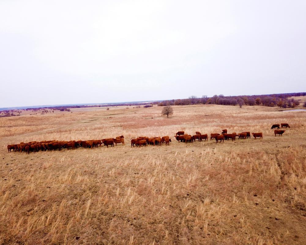lazy k ranch photos (4).jpeg