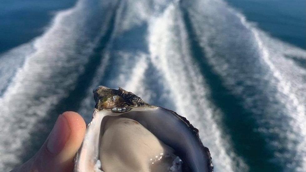 Coffin Bay Oysters Nundah collection $75 for 5 Dozen Bag
