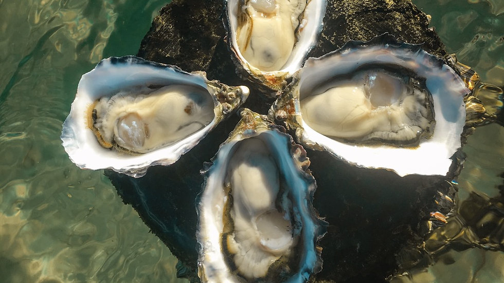 Coffin Bay Oysters Mackay collection $75 for 5 Dozen Bag