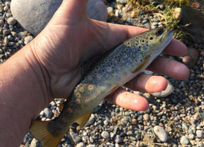 Beaver Creek On The Fly