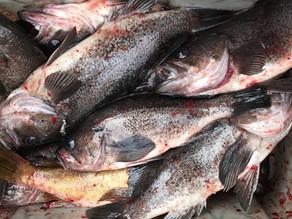 Bottom fishing in Garibaldi, Oregon