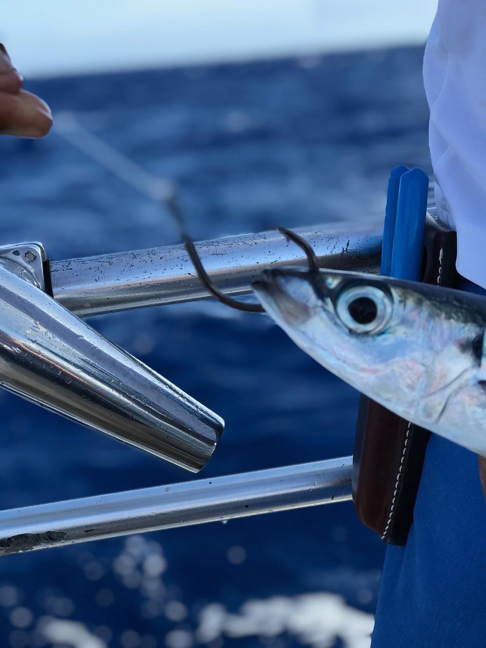 Eagle Claw Trokar TK3 Lancet Circle Hook