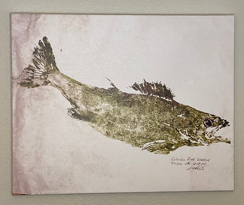 "Columbia River Walleye Canvas Print 16"" x 20"""