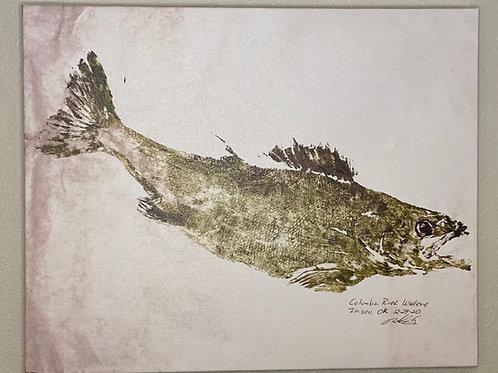 "Columbia River Walleye Canvas Print 16"" x 20"""