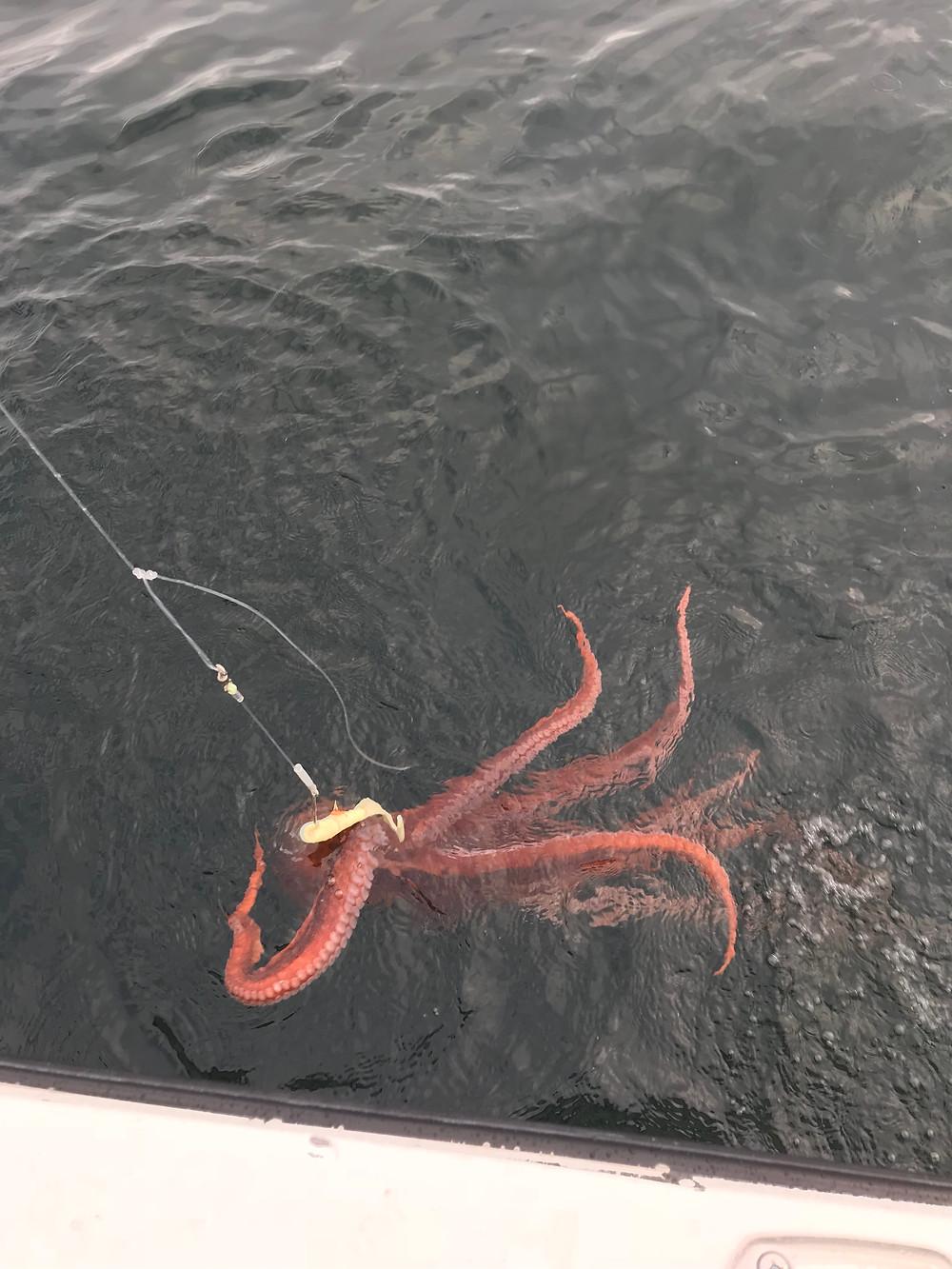 Bill Matthews Outdoors Octopus