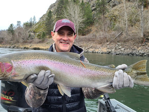 Idaho Steelhead - Clearwater River in January