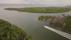 Extensive Mangrove Systems
