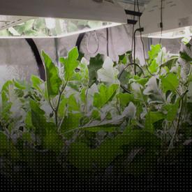 Picking Plants where the Sun doesn't Shine / Escoger plantas donde el sol no brilla