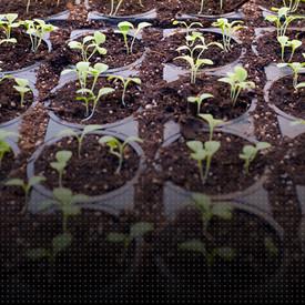 Base Nutrients Part One / Nutrientes base Primera parte