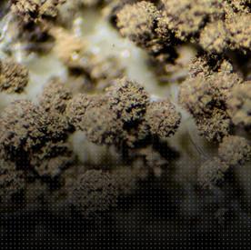 Biology Series - Compost Teas