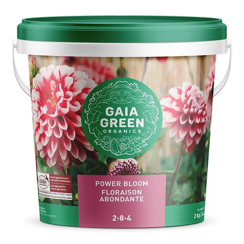 Power Bloom