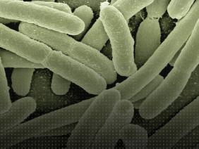 Biology Series - Biofuse