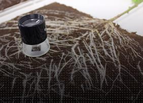 Synergy: Applying Grotek's Mycorrhizae
