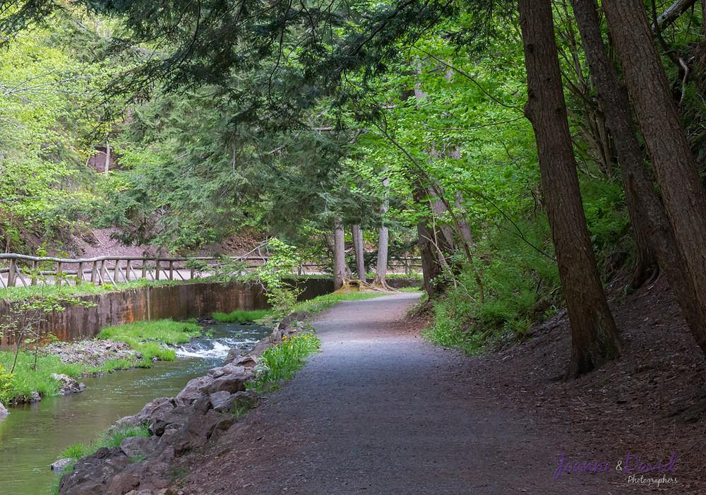 Trails along Lepper Brook, Victoria Park Truro NS