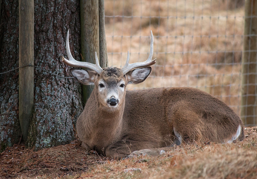Nova Scotia Photographer Shubenacadie Provincial Wildlife Park