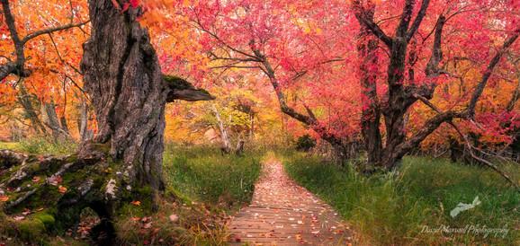 Rogers Brook Trail, Kejimkujik